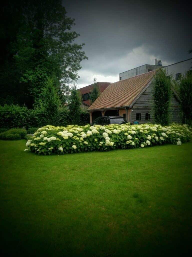 Tuinaanleg hortensias scaled