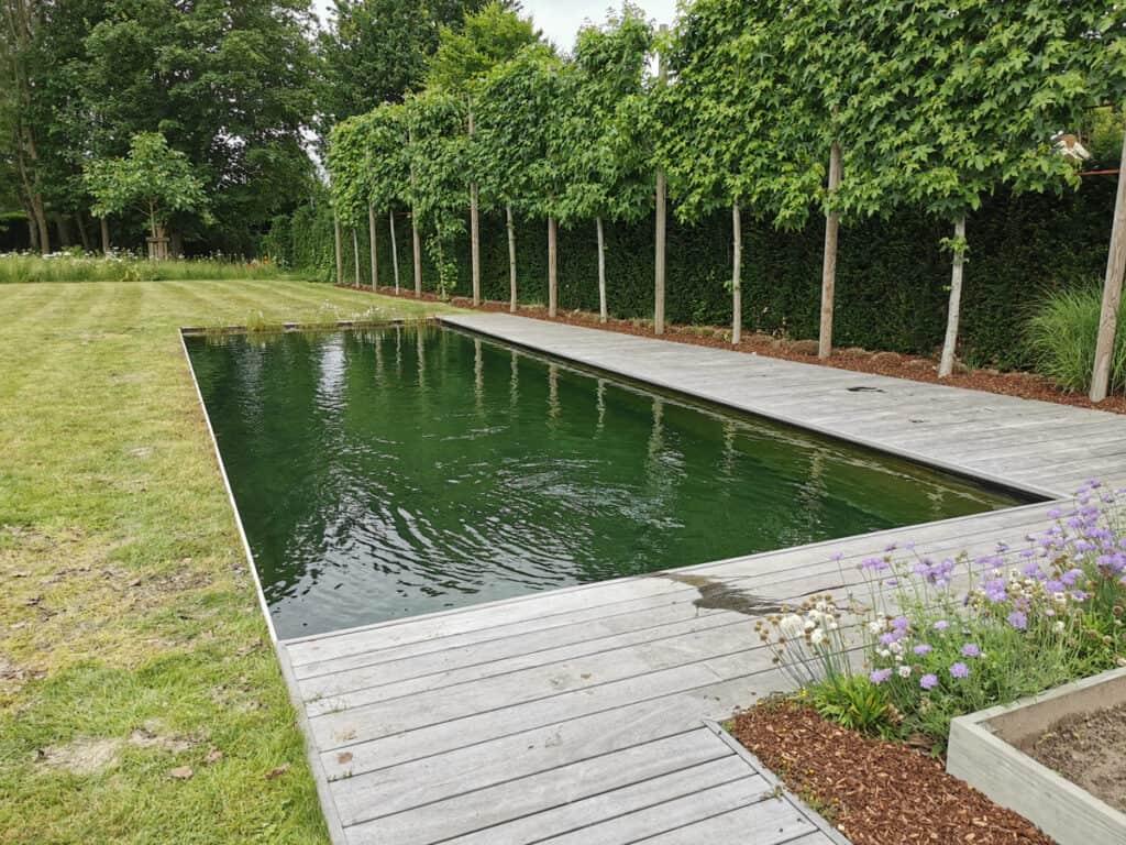 Zwemvijver natuurlijke filter